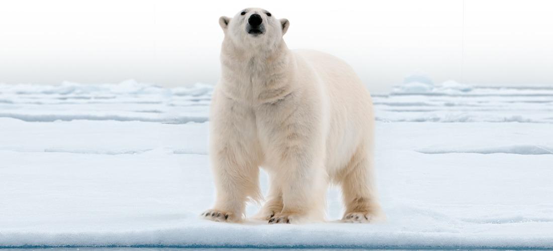 bear_big